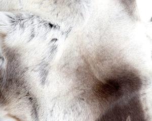 Nordic reindeer fur from Sauneco